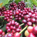 Nâng cao vị thế Cà phê và văn hóa Việt Nam