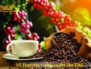 Ẩm Thực Cà Phê: Cà Phê An Thái - đỉnh cao hương vị cà phê Ban Mê